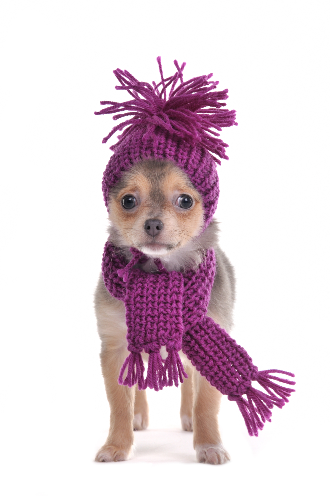 Dog-Bundled-Up